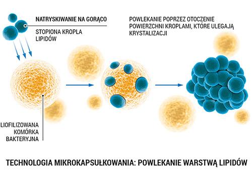 Lab One Probiotyk 30kaps